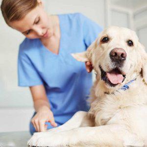 Veterina a domáce zvieratá